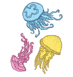 Three beautiful decorative different jellyfish vector