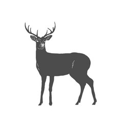 hand drawn deer isolated on white background vector image