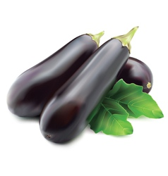 Eggplant or guinea squash vector image vector image