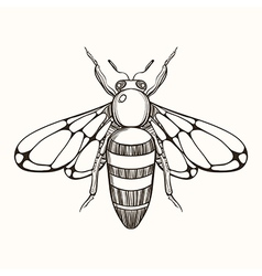 Hand drawn engraving sketch of bee for tattoo and vector