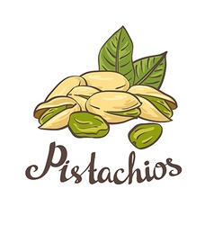 Pistachio nuts with leaves vector