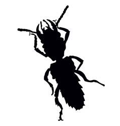Bug silhouette vector image