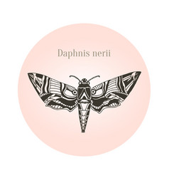 oleander hawk moth tattoo art daphnis nerii vector image