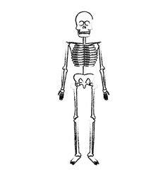 skeleton human body bones medical vector image