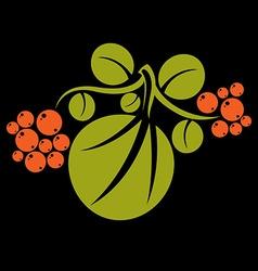 Single flat green leaf with orange seeds herbal vector
