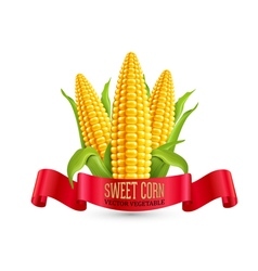 Corn three ear of corn with leaves and red ribbon vector