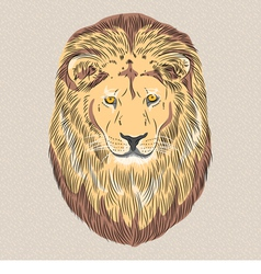 Serious wild big cat lion vector