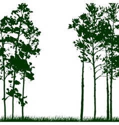 silhouette landscape with pine trees vector image