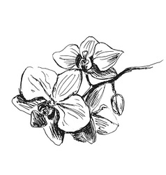Hand sketch orchids vector