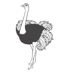 Black and white of ostrich vector image