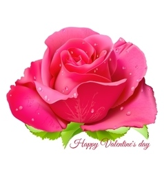Pink rose happy valentine day vector