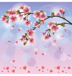 Spring background with sakura blossom Japanese vector image