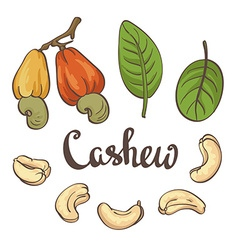 Cashew kernels and leaves vector image