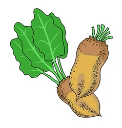 Beetroot vegetable cartoon The beets with leaves vector image