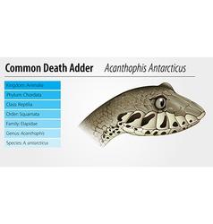 Death Adder vector image vector image