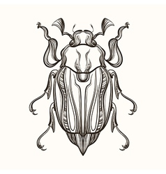 Hand drawn engraving sketch of beetle may bug for vector