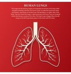 Human Lung anatomy vector image