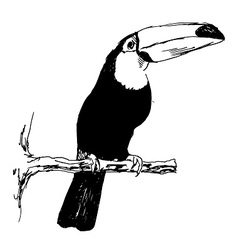 Hand sketch toucan vector