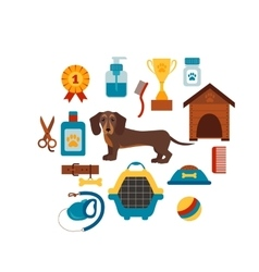 Dachsund dog infografic concept with dog care vector image vector image