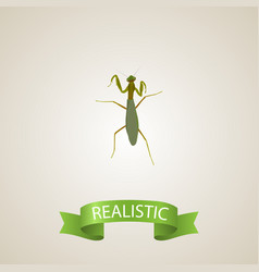 Realistic mantis element of vector