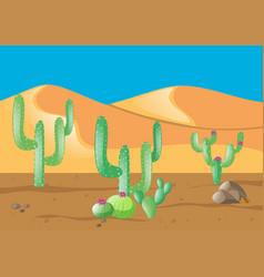 Scene with cactus in desert field vector