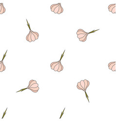 garlic hand drawn on white background hand drawn vector image vector image