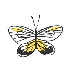 Isolated butterfly Hand drawn vector image