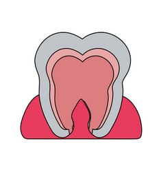 color image cartoon internal tooth view vector image