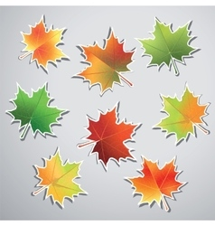 Colorful maple leaves isolated on gray background vector