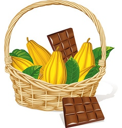 basket full of cocoa pod and chocolate isolated on vector image vector image