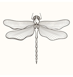 Hand drawn engraving Sketch of Dragonfly for vector image vector image