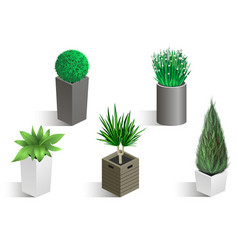 isometric set of different plants vector image vector image