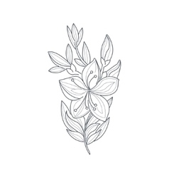 Jasmine flower monochrome drawing for coloring vector