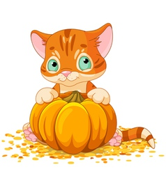 Harvest kitten vector