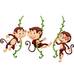 Three monkeys swinging on the vine vector