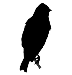 black silhouette of linnet vector image