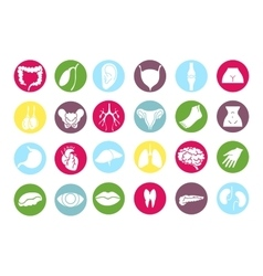 Human internal organs icons vector