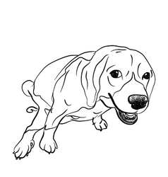 Pooping beagle vector image vector image