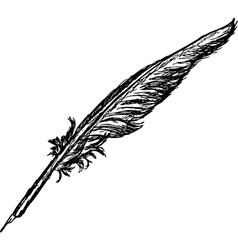 Quill vector