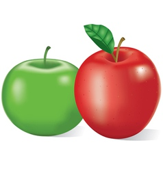 Red and green apples vector image vector image