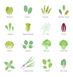 Leafy vegetables flat icons set vector