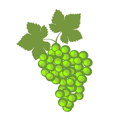 Detailed icons of green grape vector