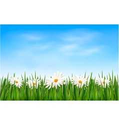 Nature background with green grass and flowers and vector image vector image