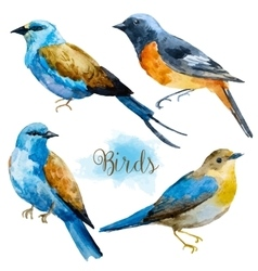 Watercolor hand drawn birds vector image