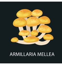 Armillaria mellea isolated wild foraged mushroom vector