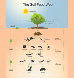 The soil food web infographic vector