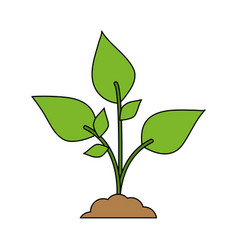Color image cartoon plant with leaves in growth vector
