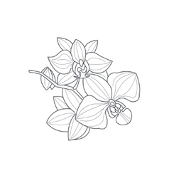 Orchid Flower Monochrome Drawing For Coloring Book vector image vector image