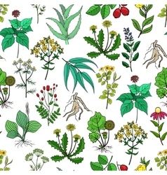 Drug plants and medicinal herbs background vector