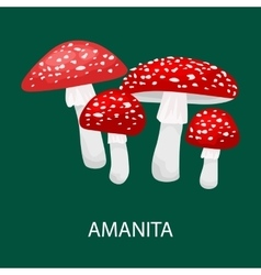 Amanita muscaria a poisonous mushroom in forest vector